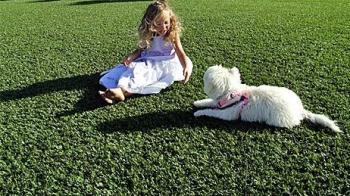 Vì sao nên chọn cỏ nhân tạo làm sân chơi cho thú cưng