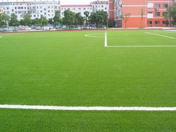 Thảm cỏ sân bóng