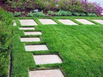 cỏ sân vườn giá rẻ tại Hà Nội